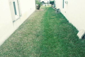 Lawn Care Melbourne Fl