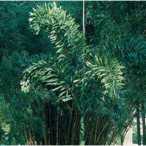 landscaping melbourne fl
